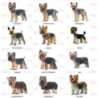 Демодекоз у собак лечение симптомы признаки фото